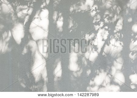 the shadow of the leaves on a white wall