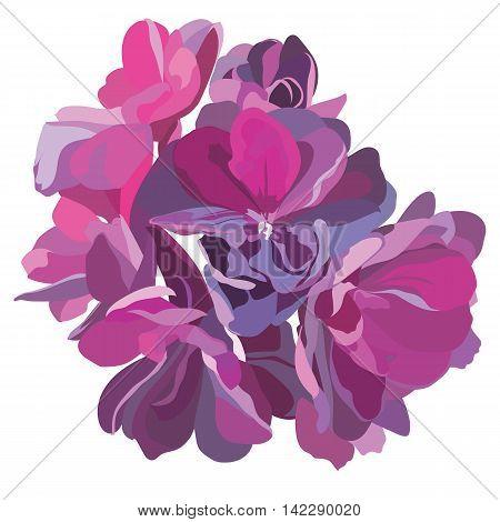 Spring Summer Flower isolated on white Vector illustration