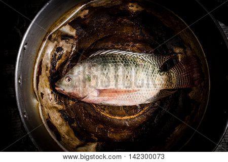 Fresh Tilapia Or Nile Tilapia Fish In Pot