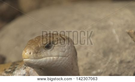 the head of snake as animal backgrouns