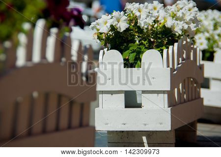 white wooden bed with white and purple petunias petunias