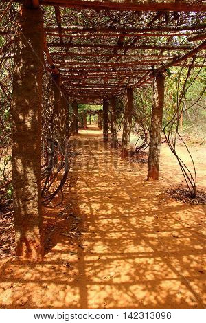 Leafy tunnel. Auroville. South India. Brown color