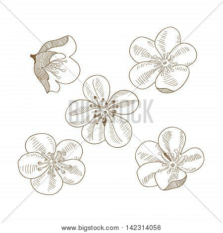Set of hand drawn flowers of plum flowers isolated on white background. Art vector illustration