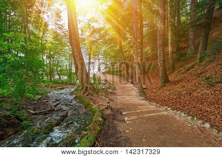 Deep Forest Road Trail in Plitvice National Park Croatia with Sun Rays.