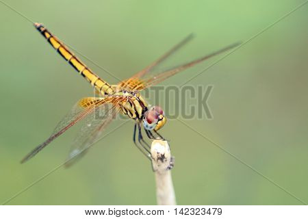 Image of dragonfly perched on a tree branch