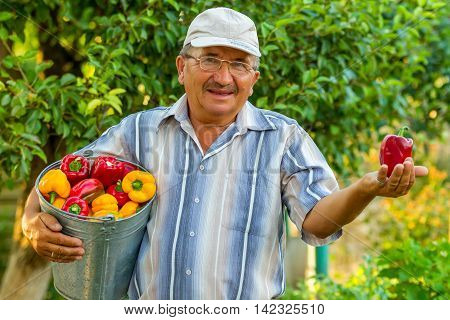 An elderly man with a bucket full of bell pepper is standing in the background of green trees. He is holding a big bell pepper in his left hand. It looks like he is giving it to you.