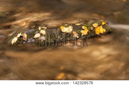 Golden water with golden leaves in Great Smokey Mountains