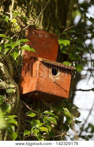 Vertical Shot Of A Birdbox In A Tree