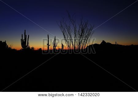 Giant saguaro cactus and organ pipe cacti  silhouette in Arizona desert sunset