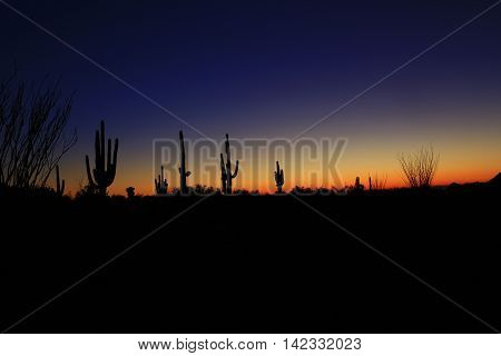 Giant saguaro cactus in evening Arizona sunset desert