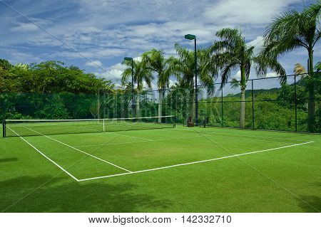 Grass tennis court with beautiful background of palm trees and blue sky.