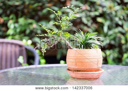 Bonsai flowerpot on the glass table in the garden.