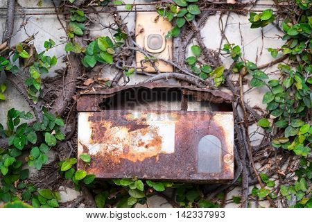 Old post box on the ivy wall.