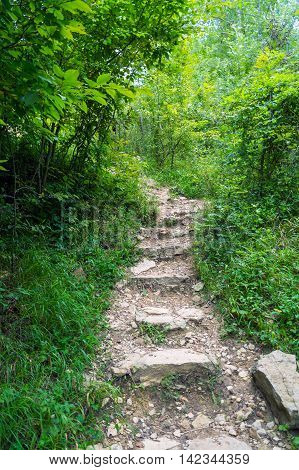 Old stairs and surrounding vegetation at Codorus State Park Pennsylvania.
