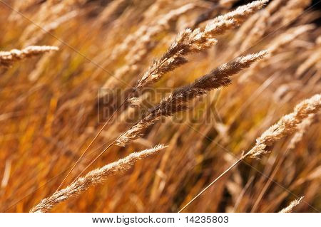 Close-up Of A Stems Of Grass At Field