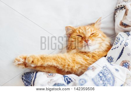 Cute ginger cat lying in bed under a blanket. Fluffy pet comfortably settled to sleep. Cozy home background with funny pet. Flat lay. Top view place for text.