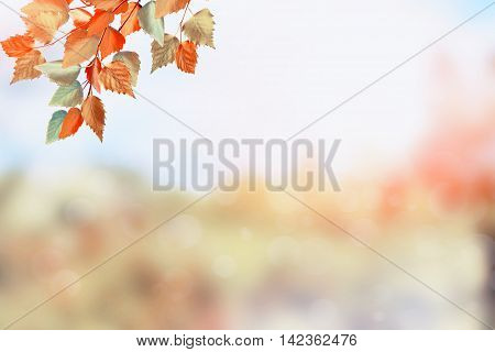 Autumn landscape. Beautiful leaves. Colorful trees. foliage