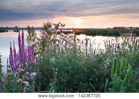 sunset over lake and wildflowers in summer
