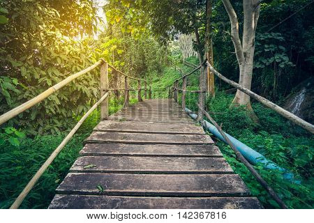 Hiking Tropical Forest Woden Bridge passage with light