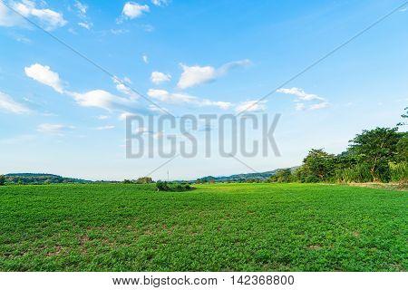 Potato farm field on Thailand high land