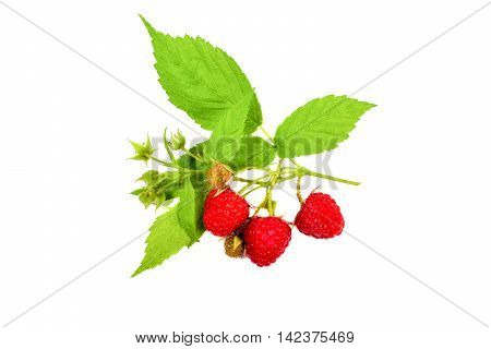 Ripe raspberry with leaf. Raw food. isolated on white.
