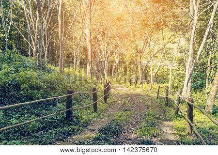 Forest Mountain Hiking Path Vintage tone with flare