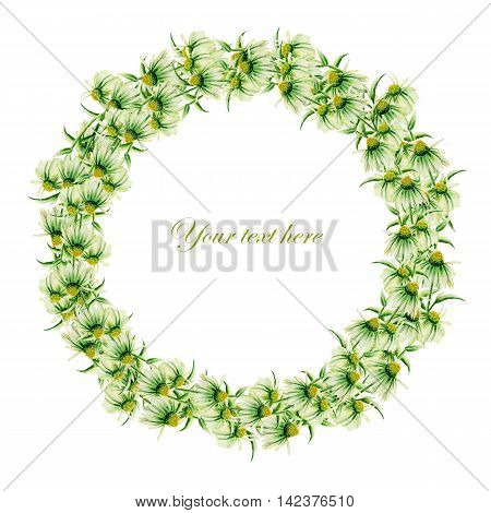 Template of postcard, frame border (wreath) with green camomiles painted in watercolor on a white background, decoration postcard, greeting card or invitation