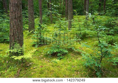 Mixed pine and deciduous forest.