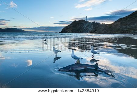 Sand Shark wash up on a beach with seagulls close to it.