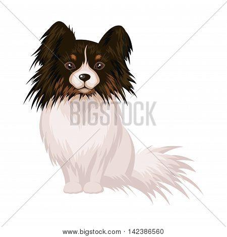 The little decorative dog Papillon on white background