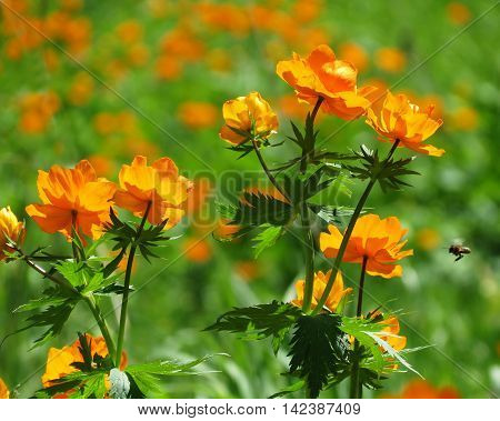 Brught orange flowers decorate steepe and timber landscape