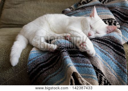 A white cat sleeping on a blanket.