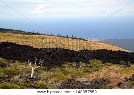 volcanic landscape along the Chain of Craters Road in Hawaii Volcanoes National Park