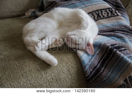 A white cat stretching on a couch.