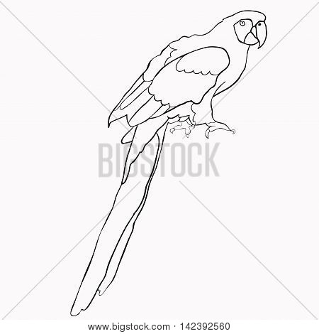 Coloring Of Caribbean Parrot Sitting. Vector Illustration