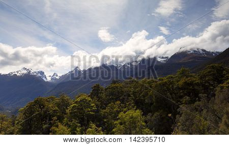 A contrast of scenery where a snow capped mountain meets with a thick green forest at the foot of the mountain.