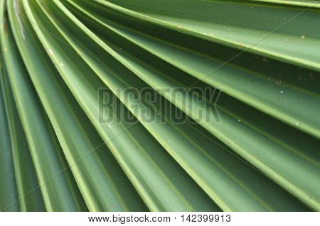 Close up of a fanned palm-like plant.