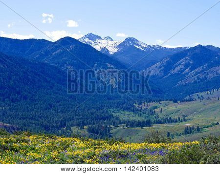 Meadows with wildflowers and snow capped mountains. Balsam Root and Lupines blooming on Patterson Mountain near Winthrop North Cascades National Park Washington State USA.