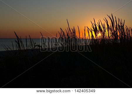 Sea and grass silhouettes in the evening sunset Ukraine, steppe region, Kinburn spit