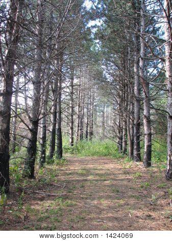 Rush Trail