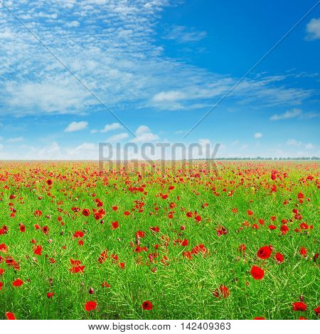 meadow with wild poppies and blue sky