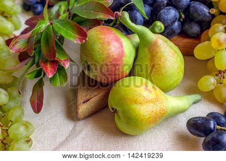 Still life - bright fruit on light fabric. Vintage black and green grapes fragrant pear and pomegranate branch. Concept - healthy food.