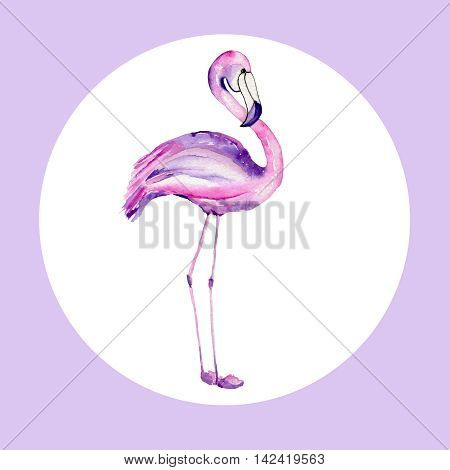 Watercolor illustration of a flamingo on a white background in the circle