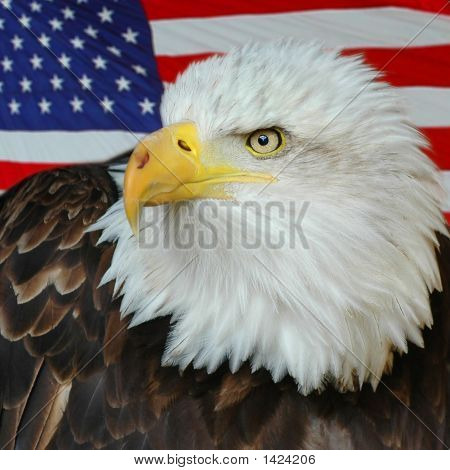 Bald Eagle And Us Flag