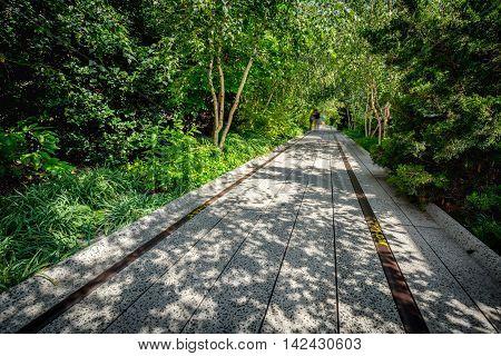 The High Line promenade in Chelsea where trees and summer vegetation completely surround the elevated walkway. A peaceful and quiet place in the heart of Manhattan, New York City