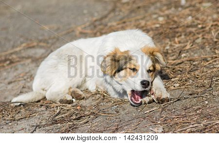 Cute mixed breed stray puppy gnawing bone for lunch