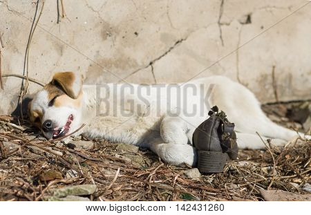 Sunny siesta for a mixed breed stray puppy