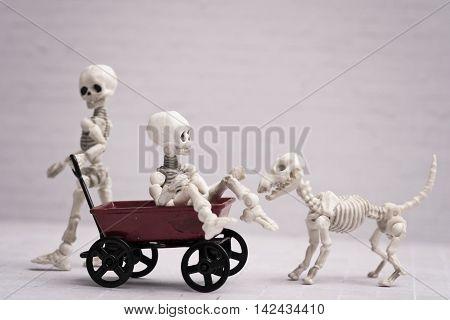 Two Skeleton playing red wagon and skeleton dog
