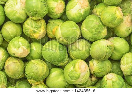 fresh natural brussel cabbage background texture detail