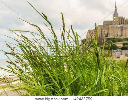 Wild grasses on the Breton meadow and Mont Saint-Michel as blurred background. France